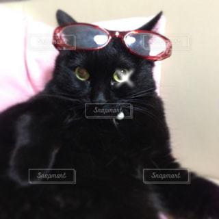 メガ猫の写真・画像素材[1350280]