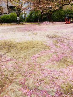花,桜,ピンク,桜吹雪,桜絨毯