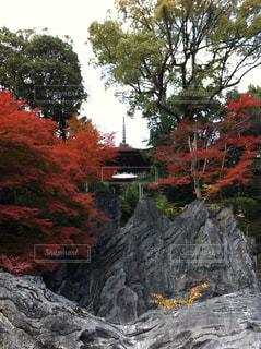 石山寺の多宝塔。の写真・画像素材[1613601]