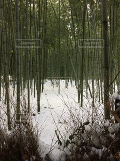 嵐山竹林の写真・画像素材[1668442]
