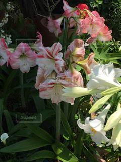 近くの花のアップの写真・画像素材[1372876]