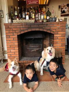 犬,動物,リビング,室内,子供,暖炉,男の子,兄弟,ボーダーコリー,中型犬,犬と子供,犬と旅行