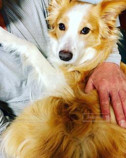 犬,動物,室内,手,抱っこ,ボーダーコリー,中型犬,お父さん