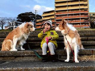 犬,公園,動物,屋外,散歩,子供,女の子,おやつ,休憩,広場,ボーダーコリー,中型犬,犬と子供