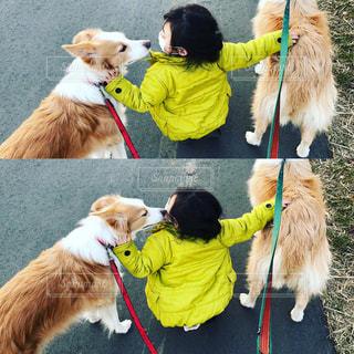犬,公園,動物,屋外,散歩,子供,女の子,キス,広場,大好き,ボーダーコリー,中型犬,犬と子供