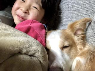 犬,動物,子供,女の子,おやすみ,ボーダーコリー,中型犬,犬と子供
