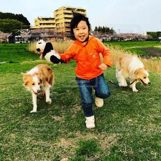 犬,屋外,ボーダーコリー,5歳,中型犬,犬と子供