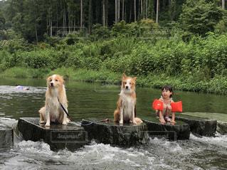 川遊びの写真・画像素材[2023779]