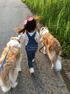 仲良し散歩の写真・画像素材[2023791]