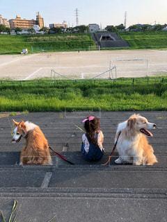 犬,動物,屋外,女の子,お散歩,ボーダーコリー,5歳,中型犬,グランド,犬と子供