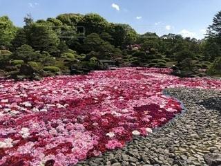 由志園の庭園の写真・画像素材[1440475]