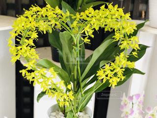 花,フラワー,ハート型,ハート,ラン,草木,多色,色・表現