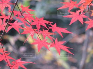紅葉,もみじ,東京都,お庭,自由が丘,九品仏浄真寺,きれいなお庭