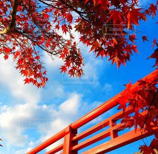 空,秋,橋,紅葉,観光,野外,11月,秋の空,大分県臼杵市