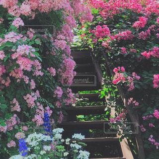 バラの中の階段の写真・画像素材[2151191]