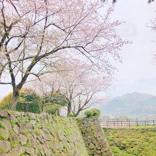 桜の写真・画像素材[4296783]