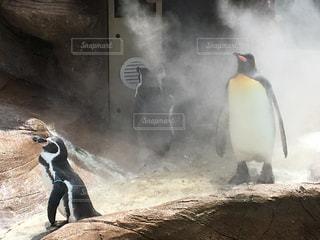 夏,動物,暑い,ペンギン