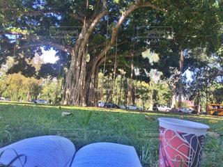 自然,空,コーヒー,屋外,青空,海岸,テスト,勉強,バニヤンツリー