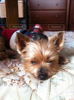 犬の写真・画像素材[40549]