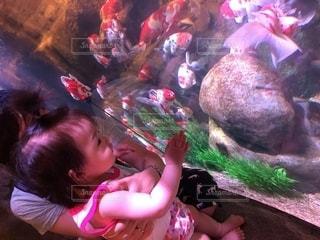 水族館,涼しげ,カラフルなお魚