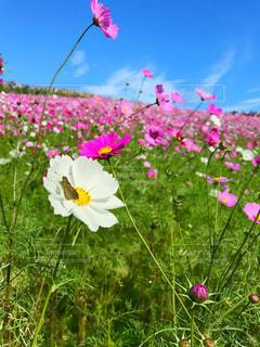 凧の飛行のフィールドの花の写真・画像素材[1377002]