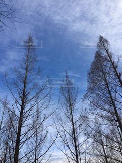 雪の木の写真・画像素材[1340389]