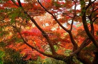 自然の写真・画像素材[2667088]