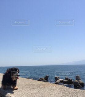 水の体の近くのビーチに座っている犬の写真・画像素材[1321970]