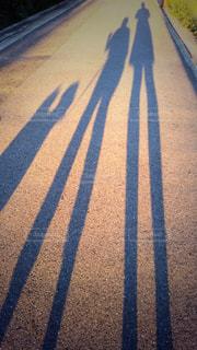 夕焼け夕涼み散歩親子犬かわいい影