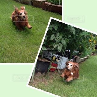 犬,芝生,運動,走れ