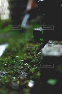 庭の写真・画像素材[2137609]
