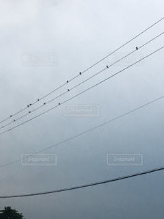 曇りの日に雀の合唱団の写真・画像素材[1433616]