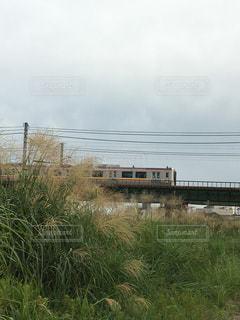ススキと電車の写真・画像素材[1466074]