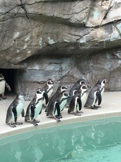 お行儀の良いペンギンちゃんたちの写真・画像素材[1713711]