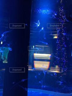 水族館の水槽とクリスマスツリーの写真・画像素材[2073077]