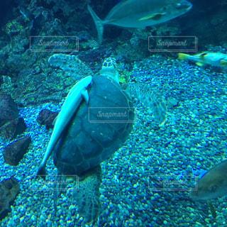 後ろ姿,水族館,仲良し,水槽,亀,甲羅,小ザメ