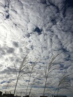 秋空とススキの写真・画像素材[2426113]