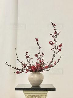 桃の写真・画像素材[1995124]