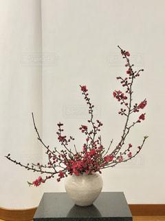 ポット明るい桃のお花!の写真・画像素材[2032203]