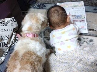 ベッドに座っている犬の写真・画像素材[3361582]