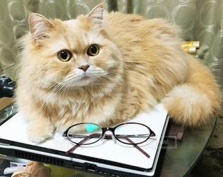 テーブルの上にパソコン、メガネ、そして猫の写真・画像素材[1384168]