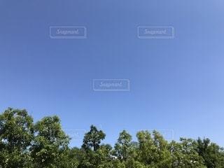 雲ひとつない青空の写真・画像素材[1312402]