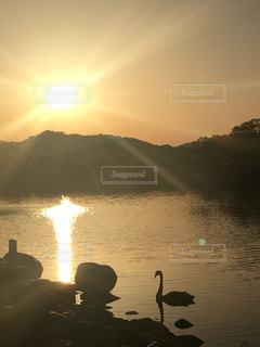 自然,空,公園,夕日,鳥,屋外,太陽,きれい,水面,池,癒し,夕陽,金色,水鳥,まぶしい,平池緑地公園