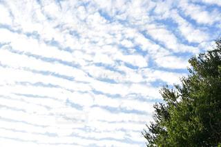 自然,風景,空,秋,雲,秋空,草木