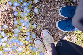 春の散歩の写真・画像素材[1798784]