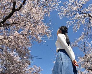 女性,花,春,桜,屋外,青空,後ろ姿,樹木,人物,人,草木,さくら,フォトジェニック