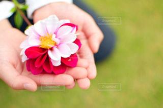 花を持つ手の写真・画像素材[2907085]