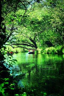水の体の隣にある木の写真・画像素材[3140498]
