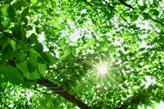 森の中の植物の写真・画像素材[3337898]