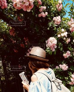 薔薇のトンネルの写真・画像素材[1394601]